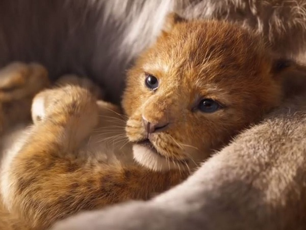 Watch The Lion King 2019 Teaser Trailer It S A Stampede
